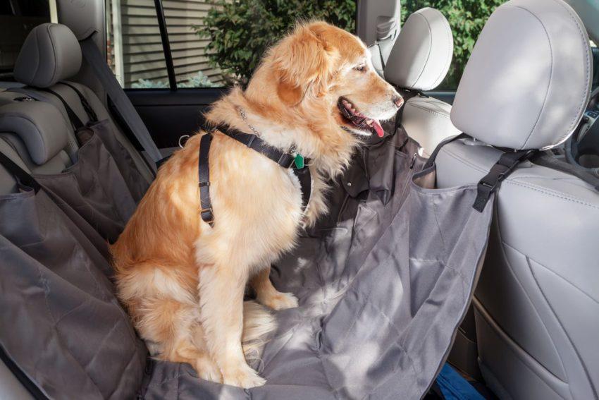 Cachorro em banco traseiro de carro